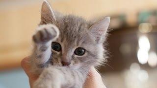 Самые милые животные! / Very cute animals!