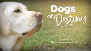 'Dogs of Destiny' Preview Trailer | Southeastern Guide Dogs