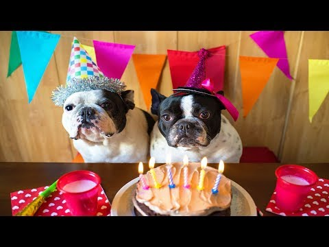 DIY: 3 Ways to Throw the Best Dog Birthday Party Ever