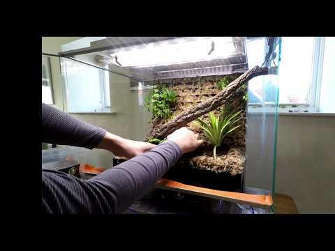 Biopod Aqua Dart Frog Scape