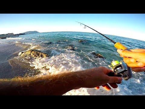 Scaricare tutti i problemi della rivista su pesca