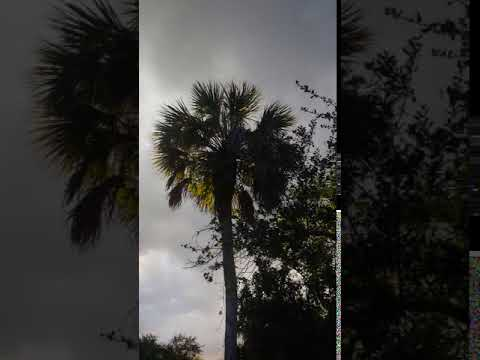 Video Of Collier-Seminole, FL