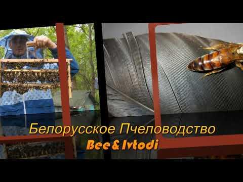 Пчеловодство. Интро для видео и заставка ютюб канала Белорусское Пчеловодство Bee&Ivtodi