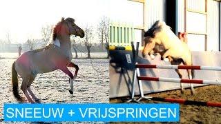 VLOG #11 Sneeuw fotoshoot & 1.15m vrijspringen! | felinehoi