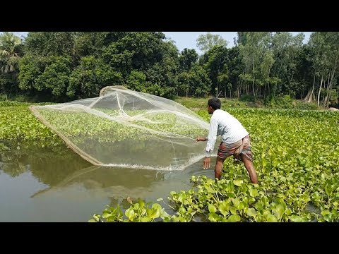 Net Fishing | Catching Lot of Fish By Cast Net | Fishing with beautiful nature (Part-35)