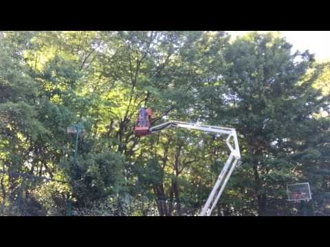 Tree Trimming Using An Articulated Boom Lift Mp3