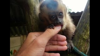 Volunteering with Rescued Wildlife - Do You Have What it Takes?