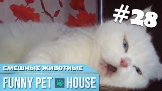 СМЕШНЫЕ ЖИВОТНЫЕ И ПИТОМЦЫ #28 ФЕВРАЛЬ 2019 [Funny Pet House] Смешные животные