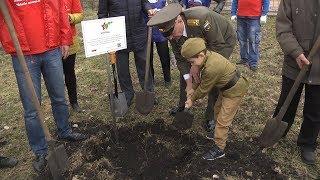 В Липецке посадили саженец волгоградского тополя, пережившего Сталинградскую битву