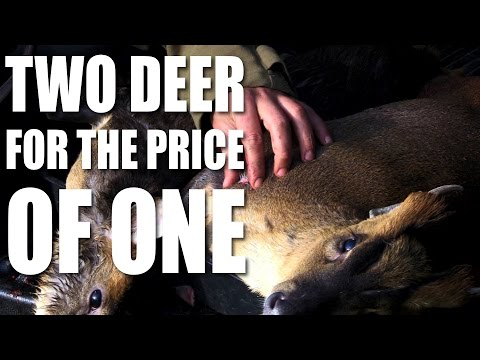 Two deer for the price of one