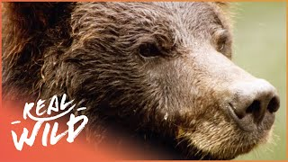 Austin Stevens Adventures - Grizzly Bear Stake Out [Documentary Series] | Real Wild