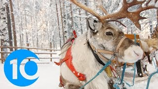 Places where you can actually visit reindeer | Kholo.pk