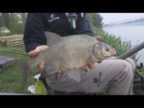Quello che può esser fatto per pesca