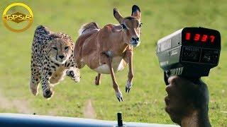 10 อันดับ สัตว์โลกที่เคลื่อนที่ได้เร็วที่สุดในโลก (ไวเกิน)