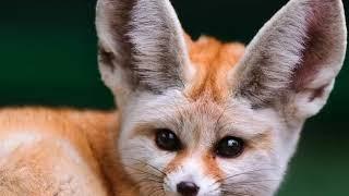 Ты можешь его завести у себя дома 10 самых необычных животных которых можно завести дома