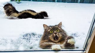 😂 Awesome Funny Cats 😸 And 🐶 Dogs  -  Best Of The 2020 Funniest And Cute Pet Videos