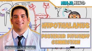 Endocrinology | Hypothalamus: Posterior Pituitary Connection