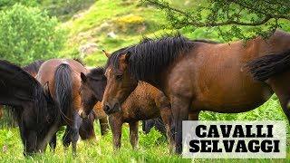 GENOVA VLOG WILD: I Cavalli Selvaggi dell'Aveto \\ VLOG VIAGGIO