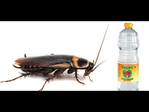 Тараканы и уксус