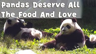 Adorable! Pandas Deserve All The Food And Love | iPanda