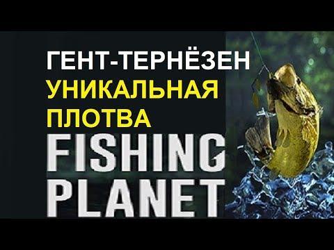 Уникальная плотва на канале Гент-тернёзен Fishing planet