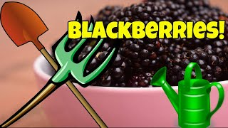 🌿GROWING BLACKBERRIES IN CONTAINERS 🌝 The Ultimate Guide 🌱(Planting) ⛏