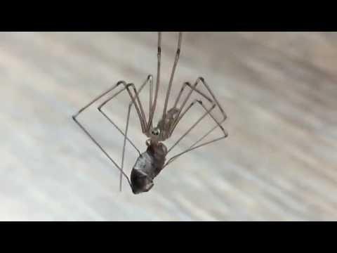 brazil pók és merevedés nincs megfelelő merevedés