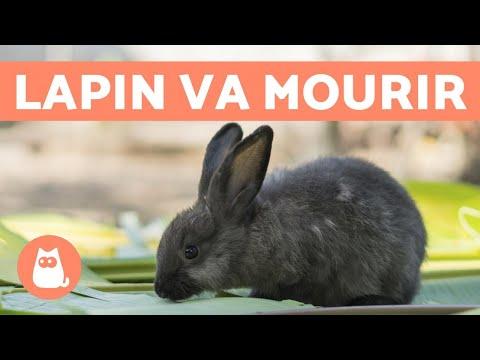 , title : '5 symptômes pour savoir si un lapin va mourir