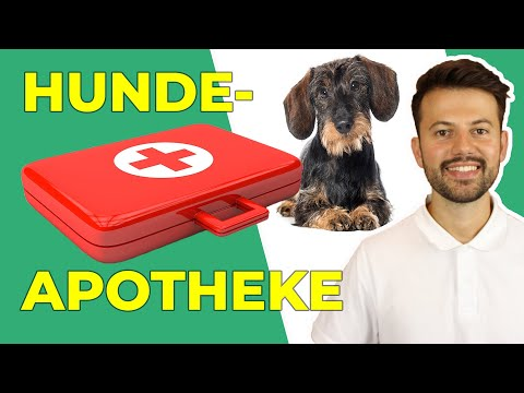 Hundeapotheke: Was muss rein? | Erste Hilfe Set für Hunde