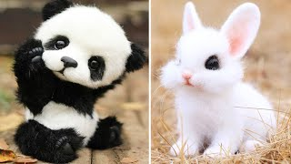 AWW Animals SOO Cute! Cute baby animals Videos Compilation cute moment of the animals #14