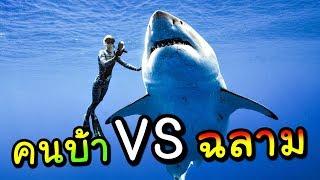 คนบ้าอะไร ดำน้ำลงไปสู้กับ ปลาฉลาม...