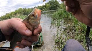Река Мокша ,ловля плотвы на пикер...
