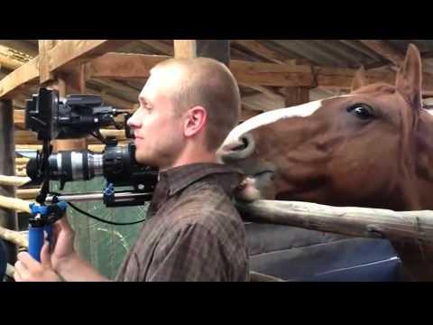 מה עושה סוס משועמם בראיון? מצחיק!