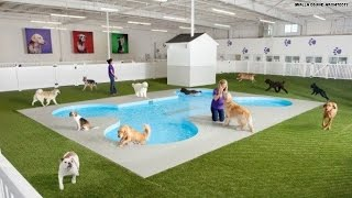 The 'Ark' will be world's first animal airport terminal