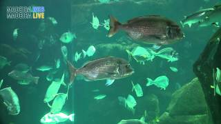 Madeira Aquarium, Porto Moniz