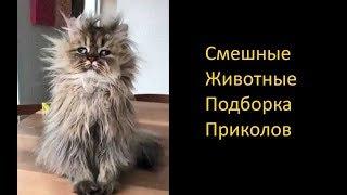 Funny Anymals. Приколы с Животными, Ленивый Кот и Купание Снегирей