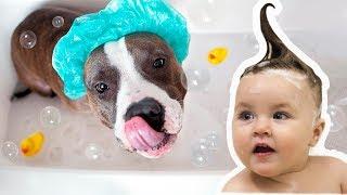 Собаки и дети, лучшие друзья, время Купаться | Dogs and Baby, the best video