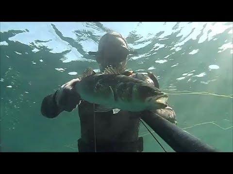 Scaricare il video su pesca del 2016