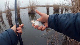 Отчеты о рыбалке 2020 поплавочная удочка