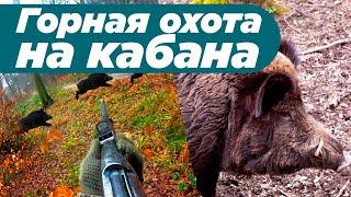 Горная охота на кабана