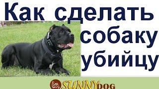 Как сделать собаку убийцу  Очень быстрыйспособ сделать собаку монстра