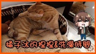 【巧克力】『橘子冰的日常』- 橘子冰的捏捏&洗澡時間