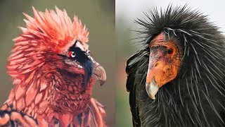 10 Most Majestic Vultures in the World