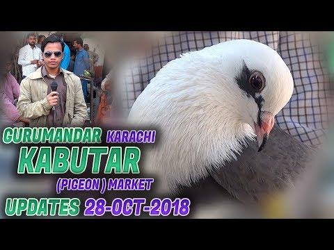 Pigeons Market in Pakistan - Guru Mandir Kabootar Market - смотреть