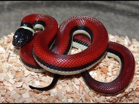 15 Deadliest Snakes from snake kingdom
