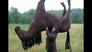 Funny Horse Videos - Try Not To Laugh [BEST OF]   New HD