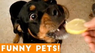 Funniest Pets & Animals of the Week Compilation July 2018 | Hilarious Try Not to Laugh Animals Fail
