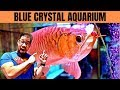 ASIAN AROWANA STORE TOUR 1 200 Gallon Monster Tank Blue Crystal Aquarium