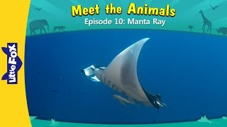 Meet the Animals 10: Manta Ray | Level 2 | By Little Fox