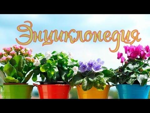 Книжный обзор - энциклопедия комнатных растений